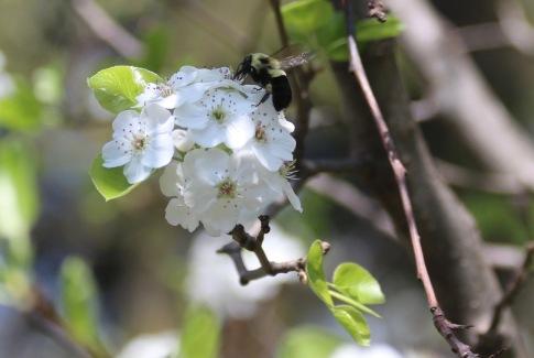 Post 59 Bee On Flower 2
