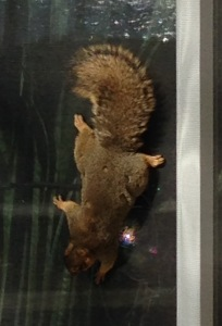 Post Squirrel Screen